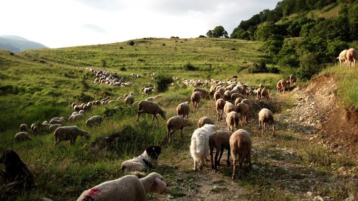 sheephill.jpg